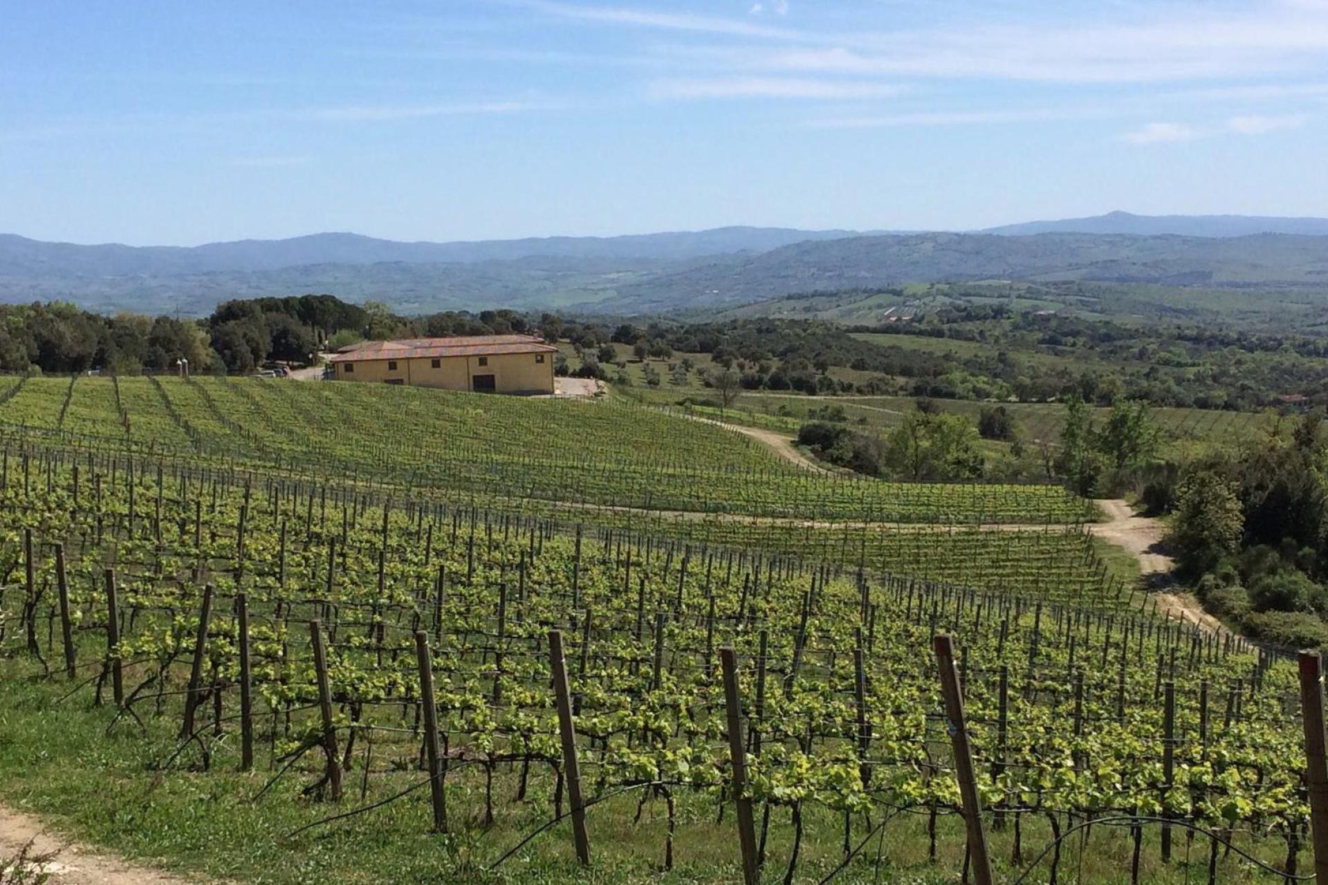Agriturismo Toskana Agriturismo Toskana, Olivenbäume und Meernähe