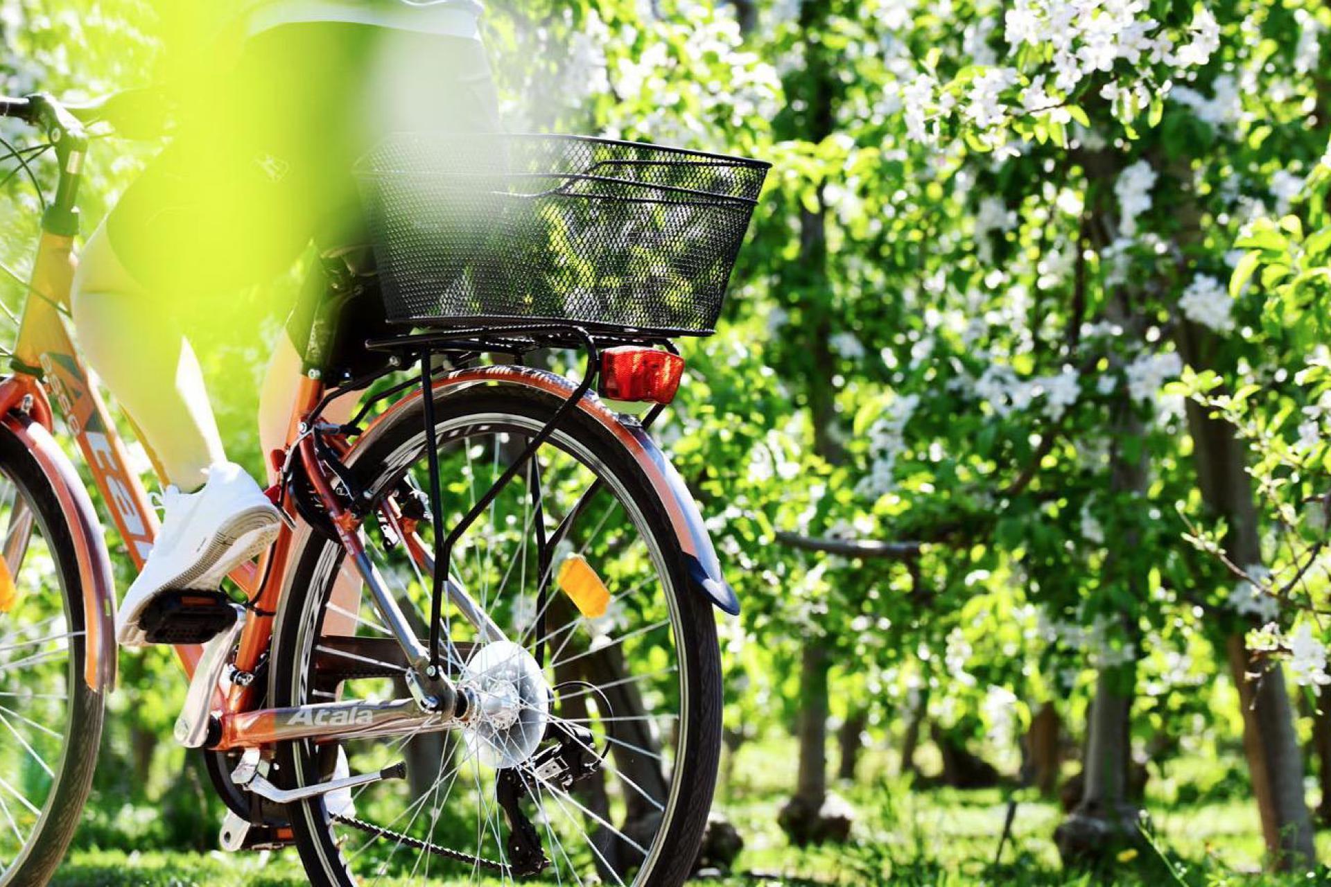 Agriturismo Dolomiten Gemütliches Agriturismo in einem Apfelgarten in den Dolomiten