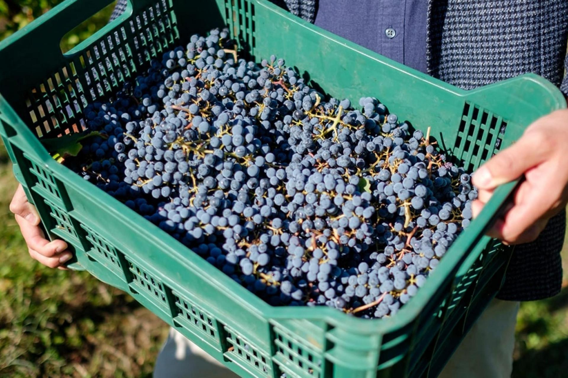 Agriturismo Toskana Schönes Weingut in der Chianti Region der Toskana   myitalyselection.de