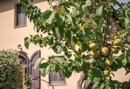 Agriturismo Toskana, Olivenhain und fantastischer Blick