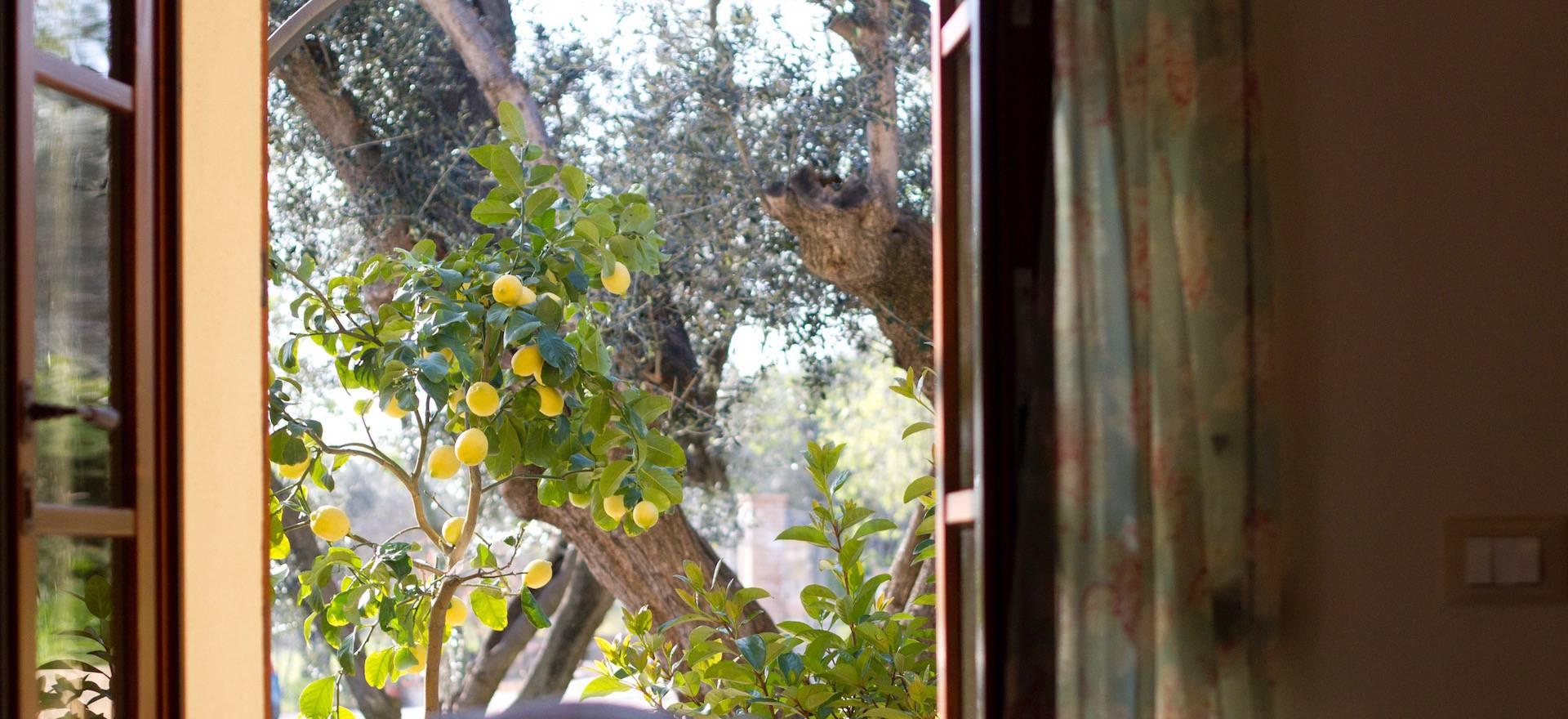 Agriturismo Toskana Agriturismo Toskana, zwischen Olivenbäumen, strandnah